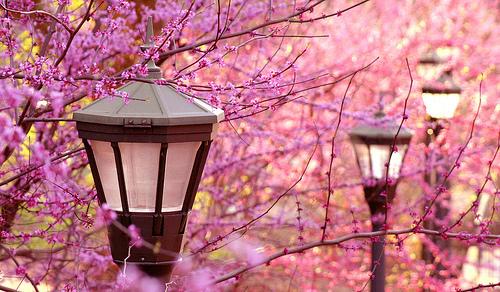 Download 100+ Wallpaper Cantik Bunga Sakura HD